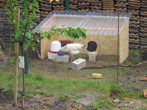 Regenunterstand Hühner