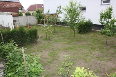 Rasen nach zehn Tagen