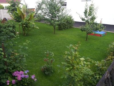 Neuer Rasen